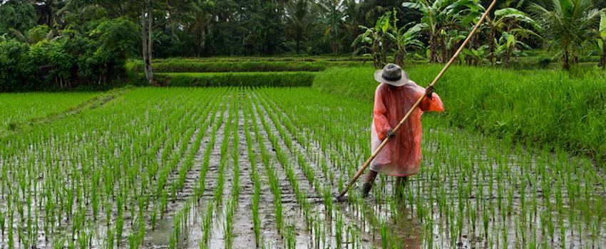 Prime Production - Sustainable Development